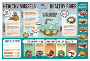 Freshwater mussels interpretive sign