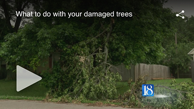 WLFI - What to do with your damaged trees