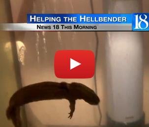 Hellbender WLFI Video