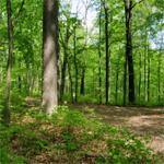 Hardwood Ecosystem Experiment (HEE)