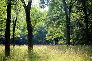 trees, grasslands