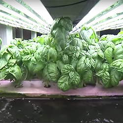 Aquaponics Bed, Purdue University