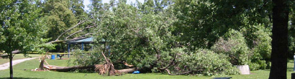 Damaged trees from storm.