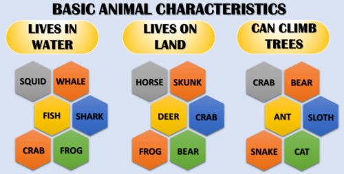 Basic Animal Characteristics Chart