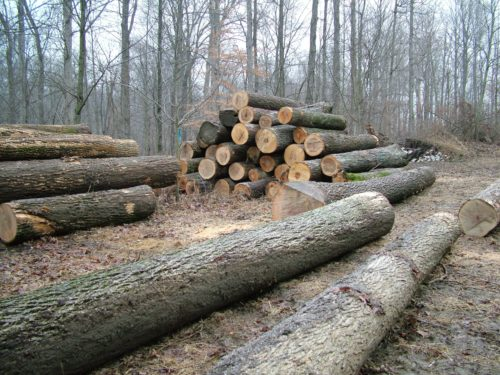 Timber Stacked and Chopped up