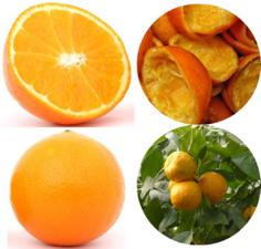 Orange Close Ups