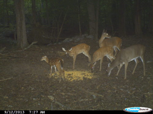 Deer camera capture