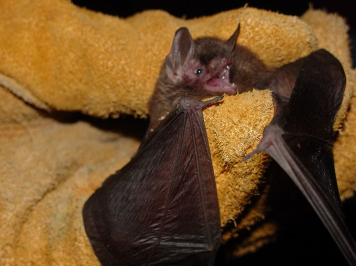 At Diffe Times Of The Year I Get Questions About Bats In Structures Are A Timely Issue Towards End Summer Because Young Will Soon Be