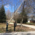 Tree leans