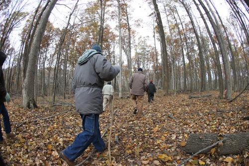 Field Days, people walking in woods.