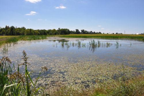 Pond Nature Scene
