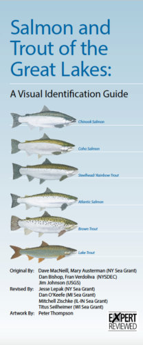 Salmon and Trout of the Great Lakes: A Visual Identification Guide