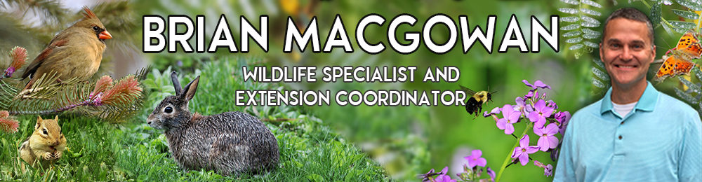 Brian MacGowan, Wildlife Extension Specialist & Extension Coordinator