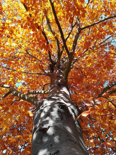 tree with orange leaves