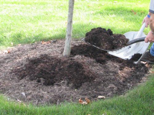 mulch at base of tree