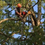 Tree work requires training and expertise for safe pruning and removals.