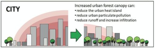 benefits of trees in downtown area