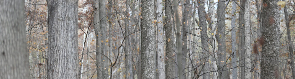woodlandBannner