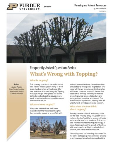 Topping Trees Publication Photo