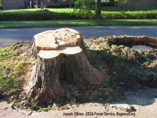Tree stump, Joseph OBrien, USDA Forest Service, Bugwood.org