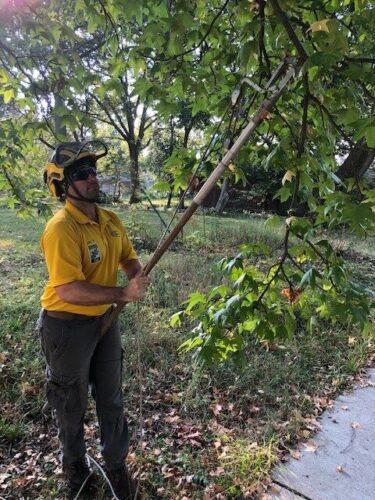 Pruning Photo