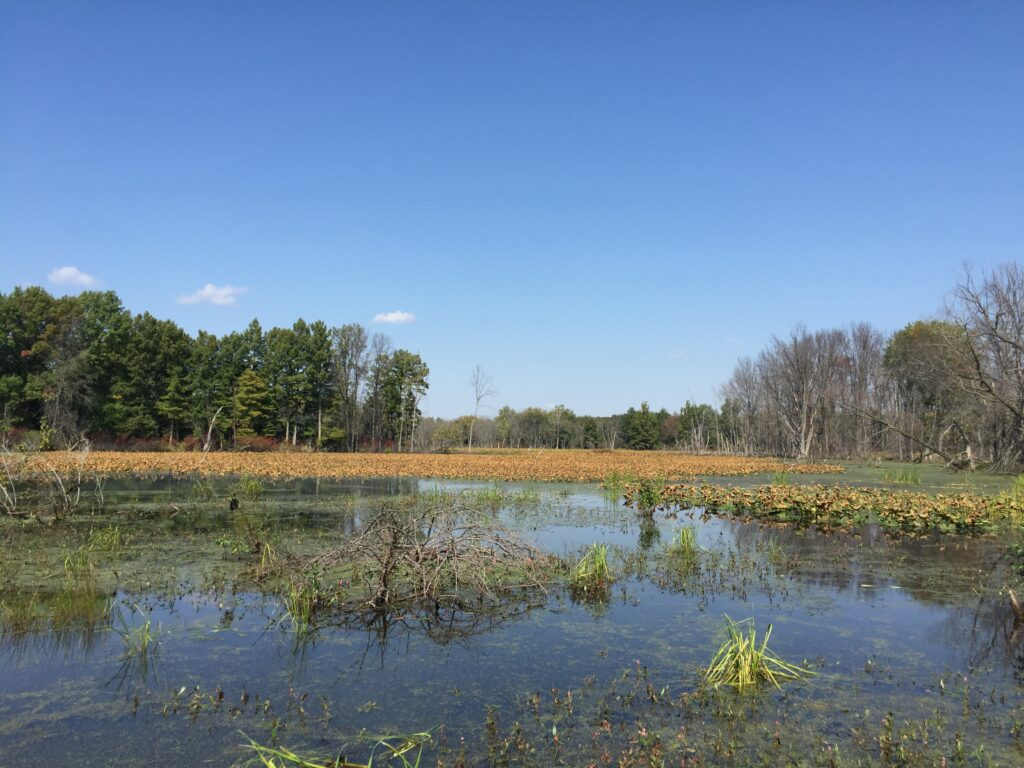 Purdue Wildlife Main Pond