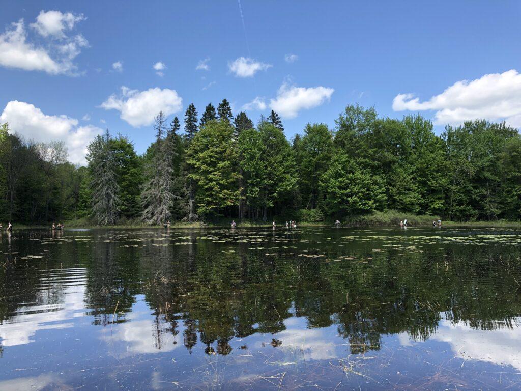 Summer Practicum Michigan pond and forest, HERP Week