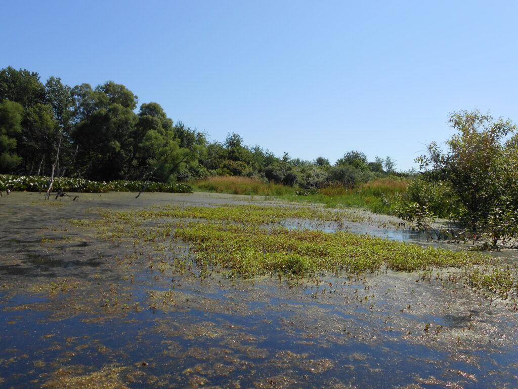 Purdue Wlldlife Area Main Pond