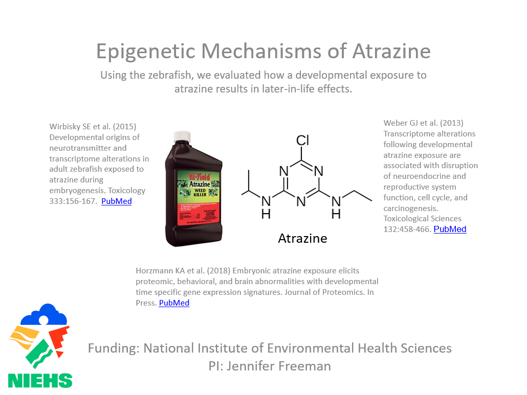 Epigenetic Mechanisms of Atrazine