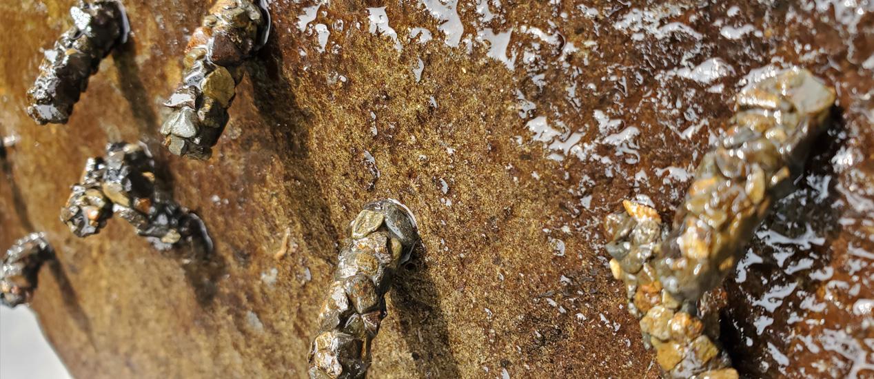 Caddlesflies, Tierra del Fuego, Chile