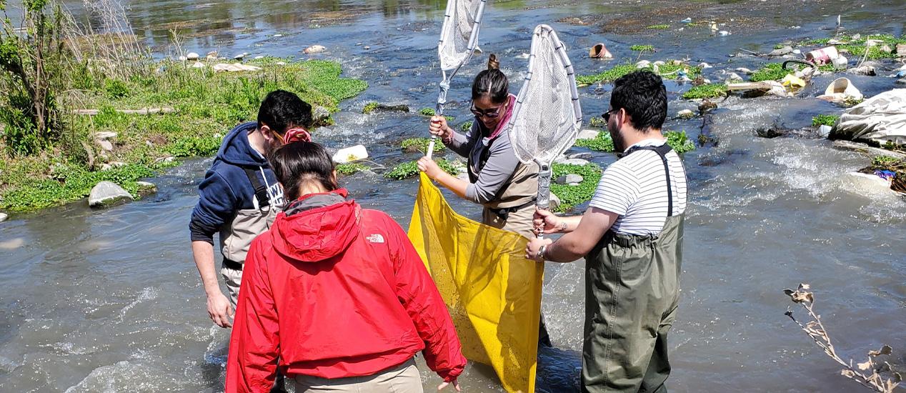 Collecting Macroinvertebrates Maipo River Chile Dec 2019