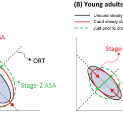 Synergies in young and older adults