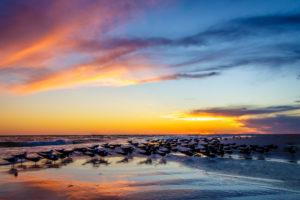 Lido Key Beach, Sarasota, FL