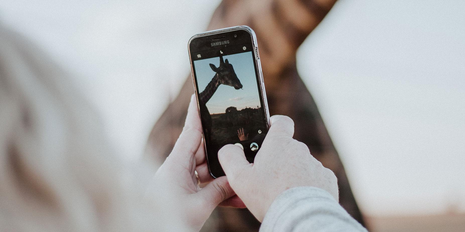Instagram travel photo of giraffe