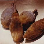 Adansonia digitata fruit