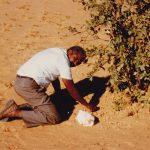 Boscia senegalenses