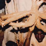 Manihot esculenta roots