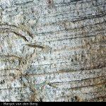 Adansonia digitata bark