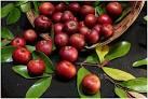 Garcinia indica fruit