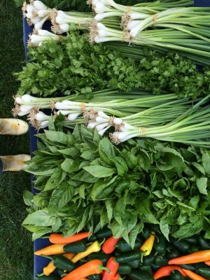 Green Onions + Herbs