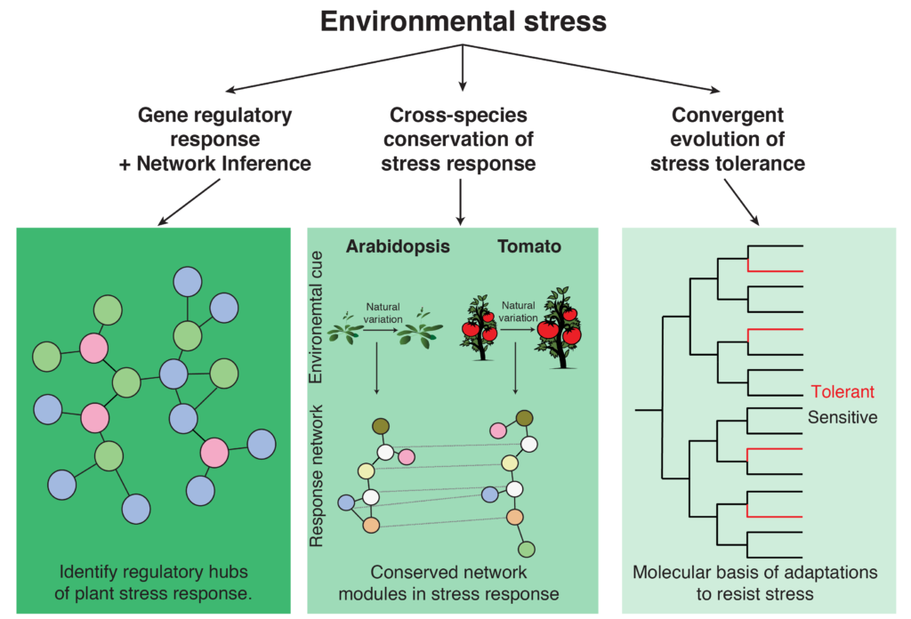 We focus on gene network responses to environmental stressors and the conservation of this network across species.