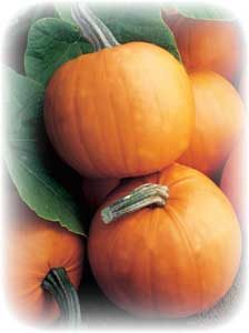 picture of several Orange Smoothie pumpkins laying together