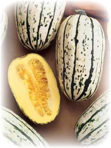 picture of the Bush Delicata winter squash including one cut in half