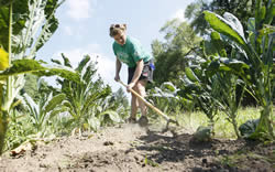 Picture of girl hoeing weeds in a garden.  Purdue Agricultural Communication photos/Tom Campbell.