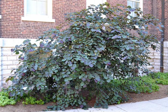 Cómo plantar una cala púrpura fuera | Inicio Guías | Puerta SF