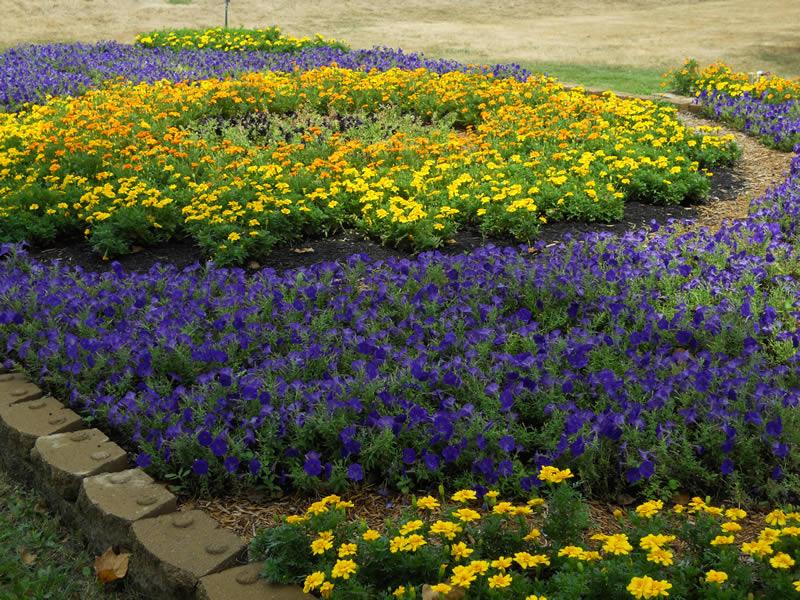 Blue & Gold gardens celebrate Indiana's
