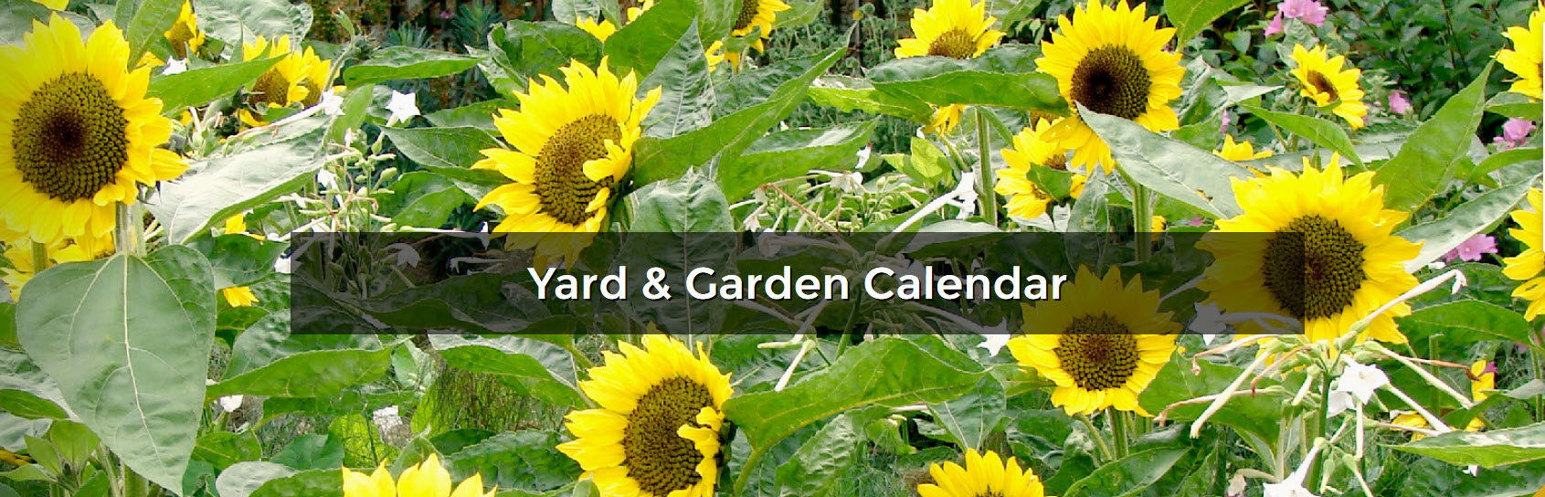 Yard and Garden Calendar banner displaying sunflowers