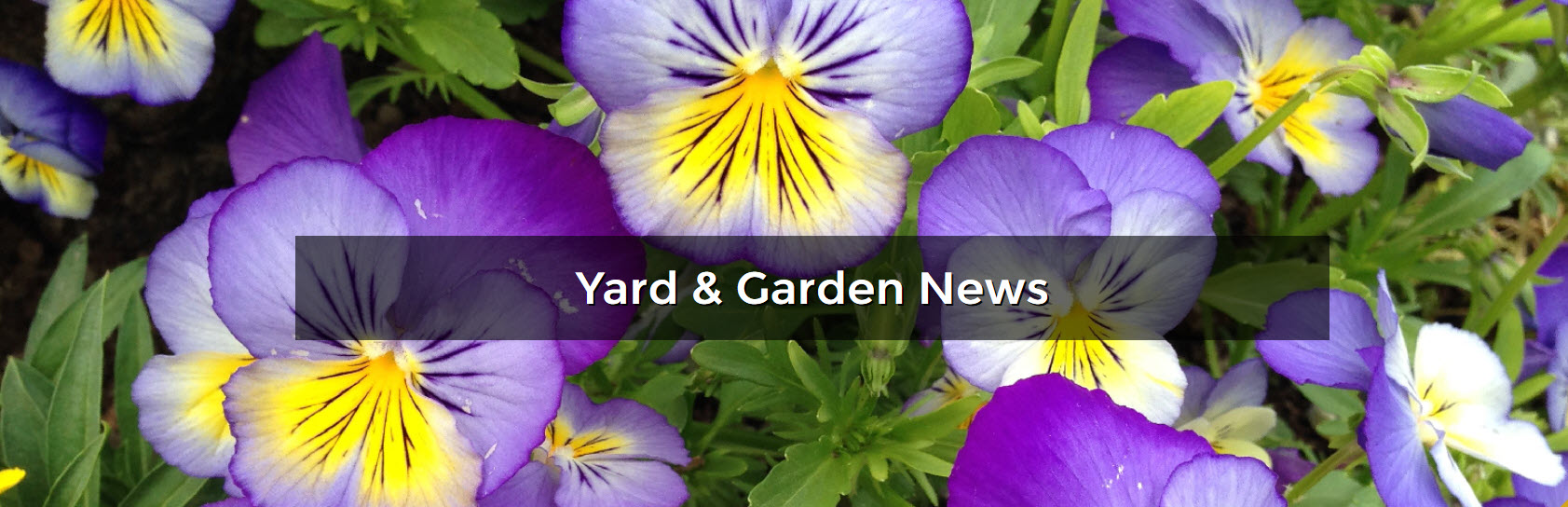 Yard and Garden News Banner of flower blooms