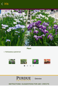screen shot of the Iris plant page of the app