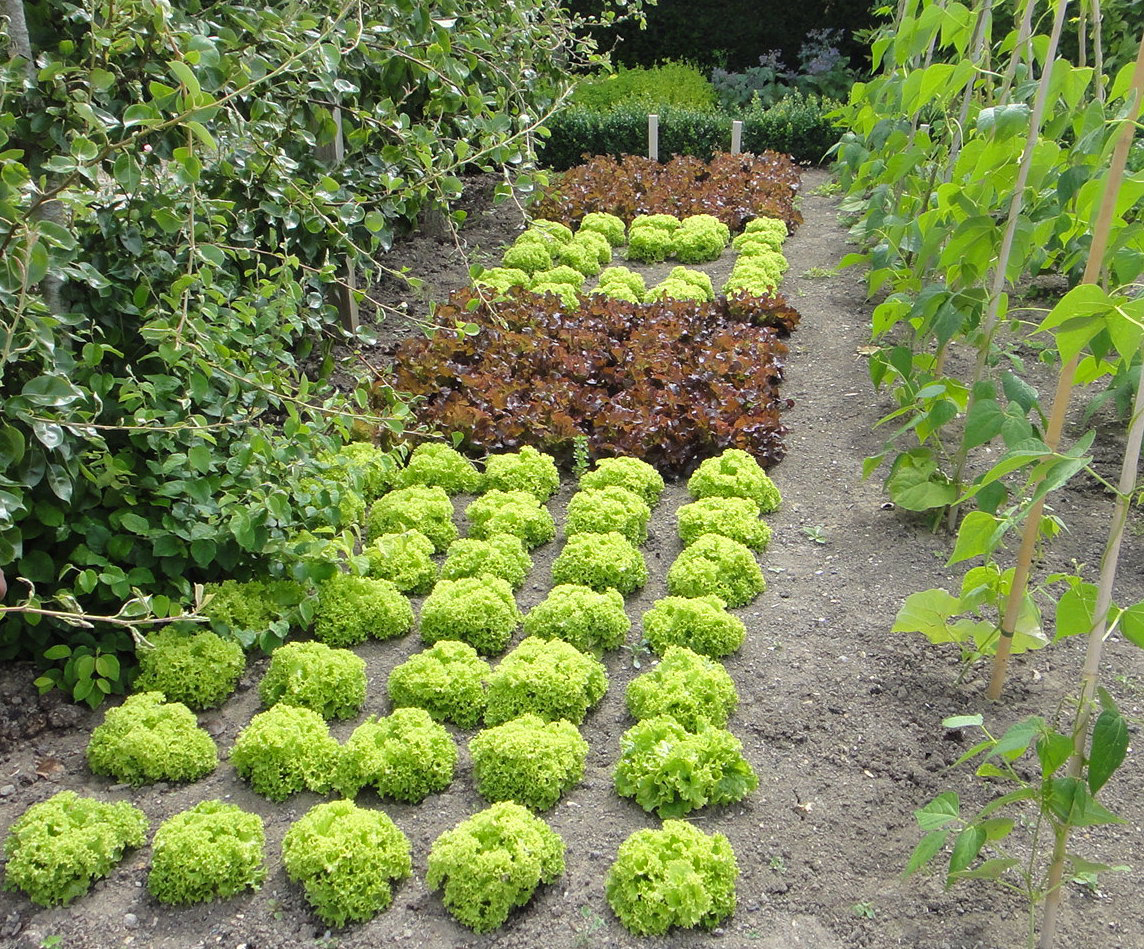 Advice For First Time Gardeners Start Small Indiana Yard And